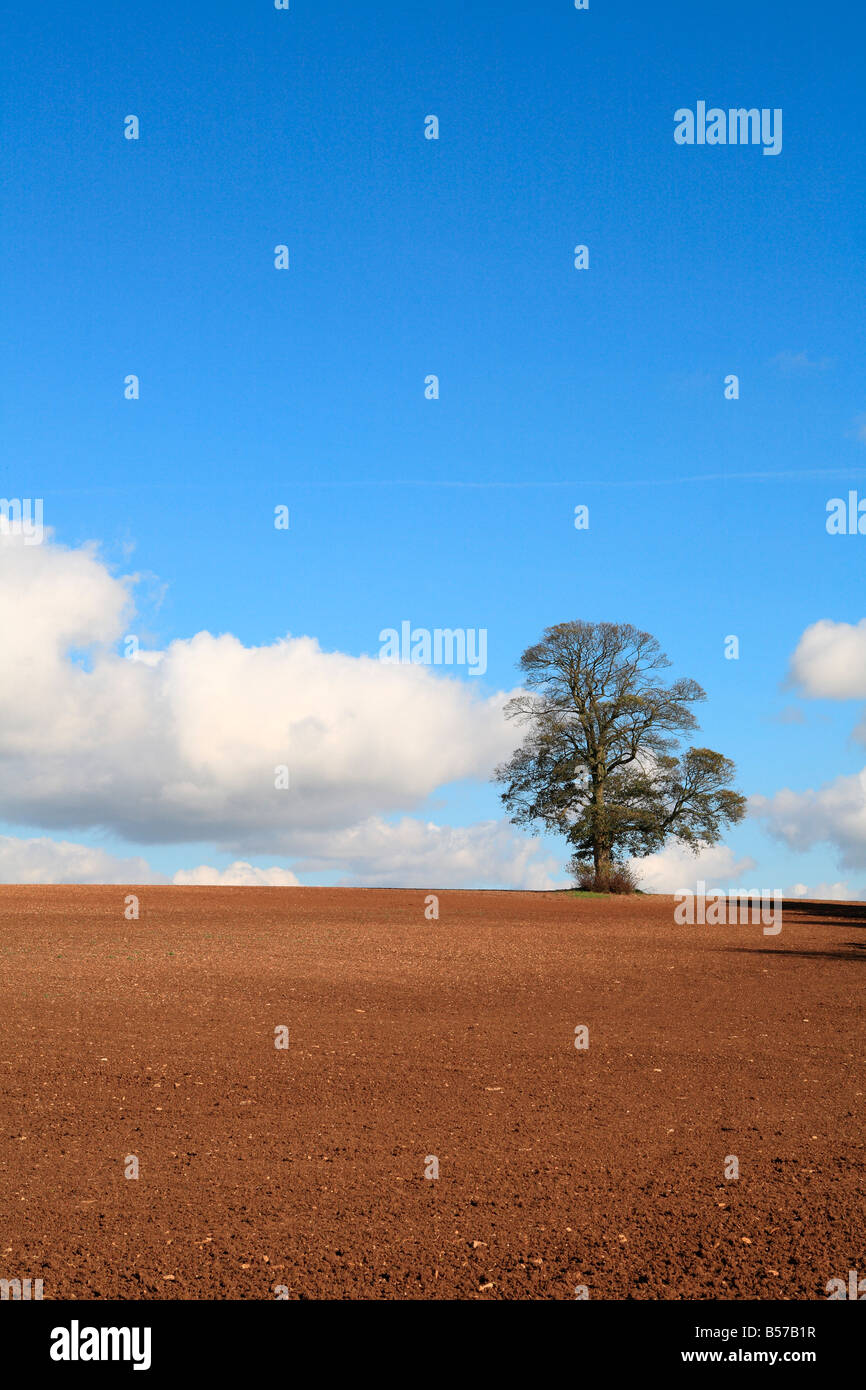 Lone Tree in Agricultural Setting - Stock Image