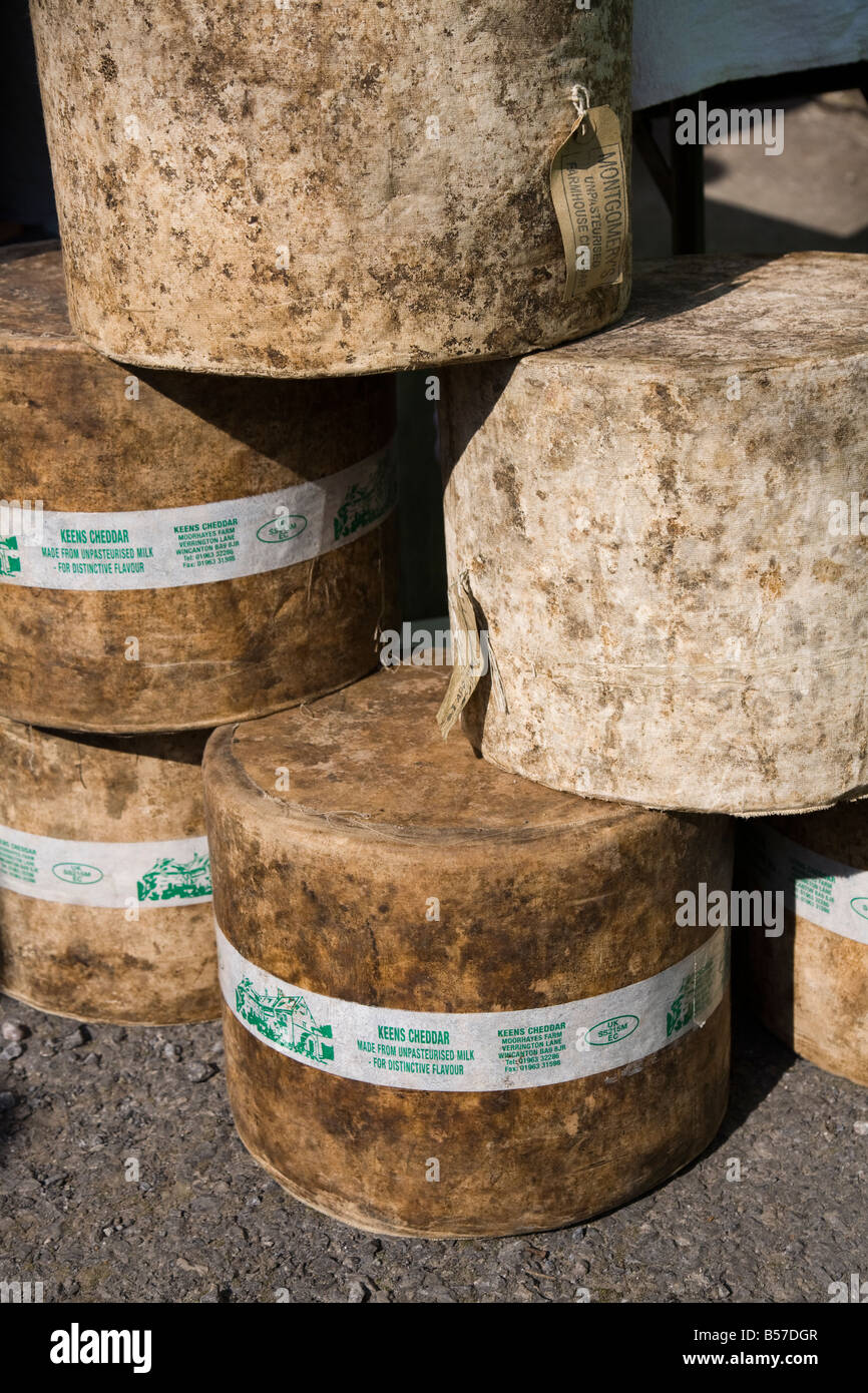 Large rounds of uncut cheddar cheese UK - Stock Image