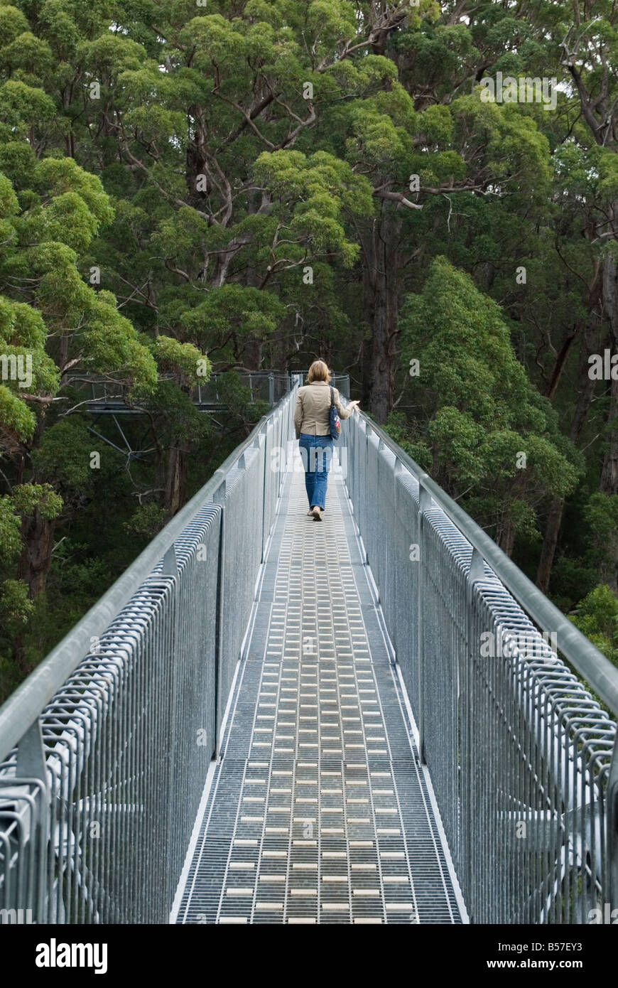 A woman walks along the Valley of the Giants Tree Top Walk walkway through the Red Tingle forest, Walpole Nornalup - Stock Image