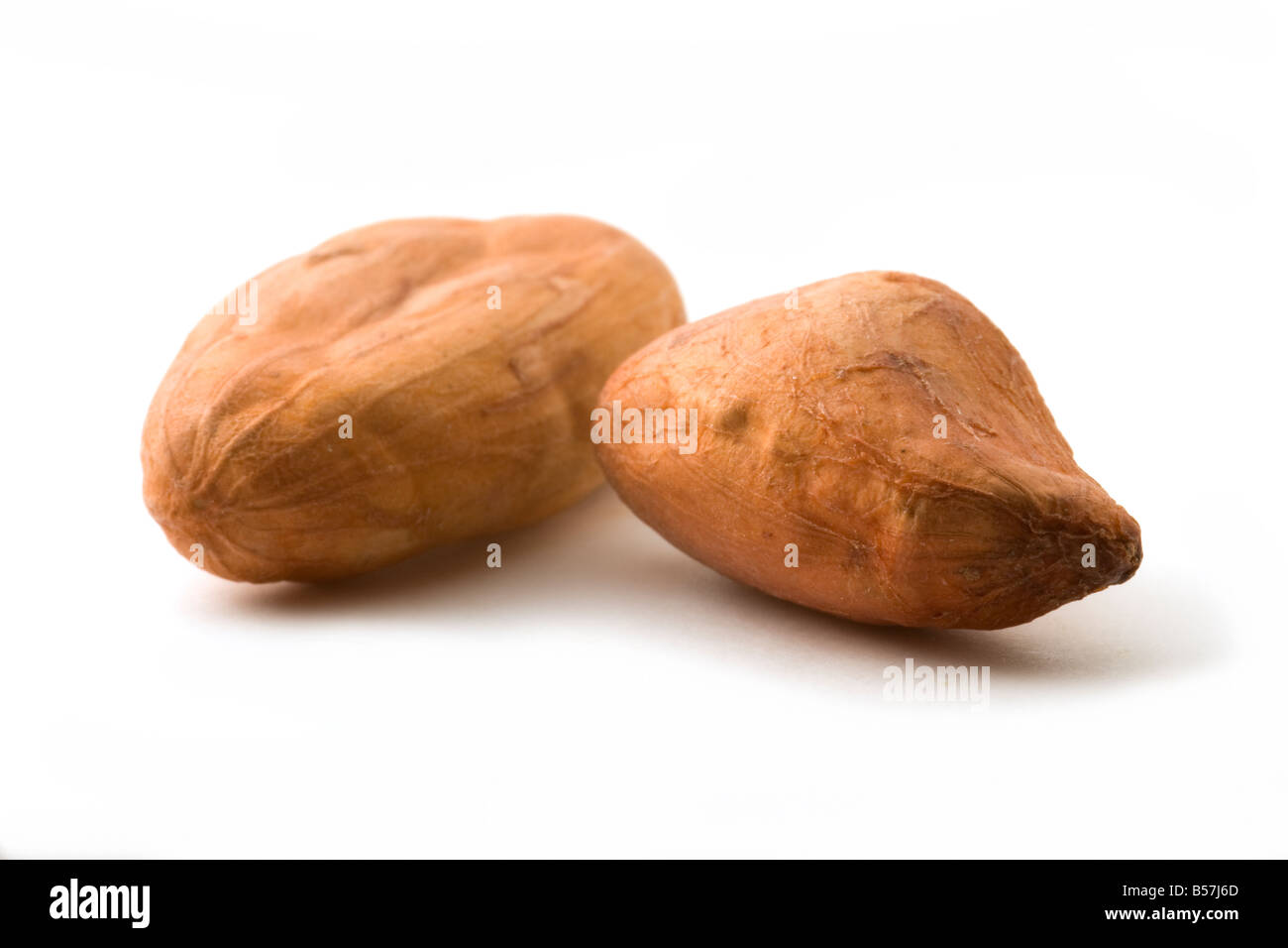 Cacao Beans on a White Background. - Stock Image