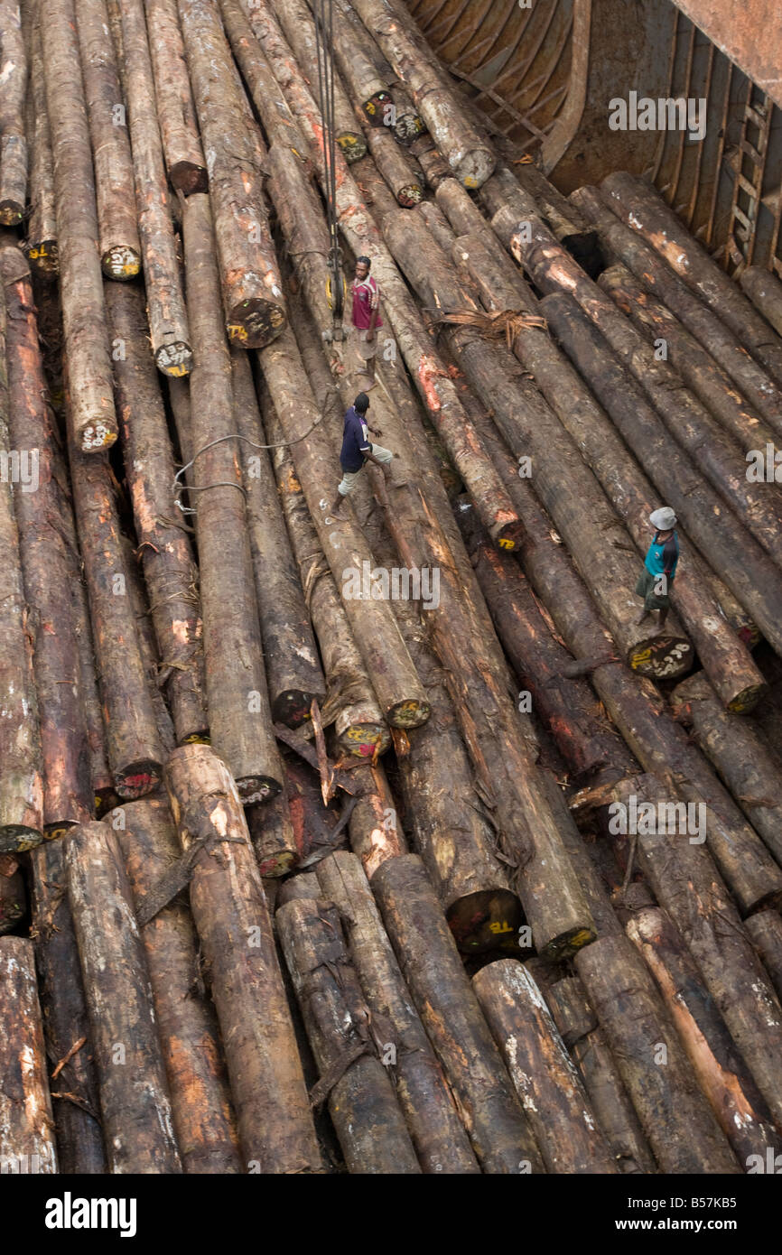 loading of illegally logged trees, from rainforests of Papua New Guinea, onto cargo ship in Paia inlet, Gulf Province, - Stock Image