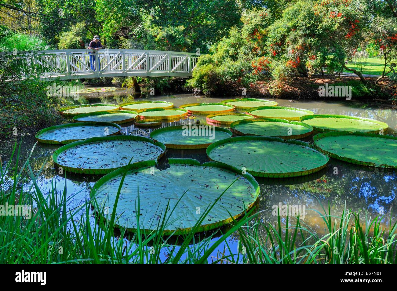 Kanapaha Gardens Gainesville Florida Giant Victoria Water