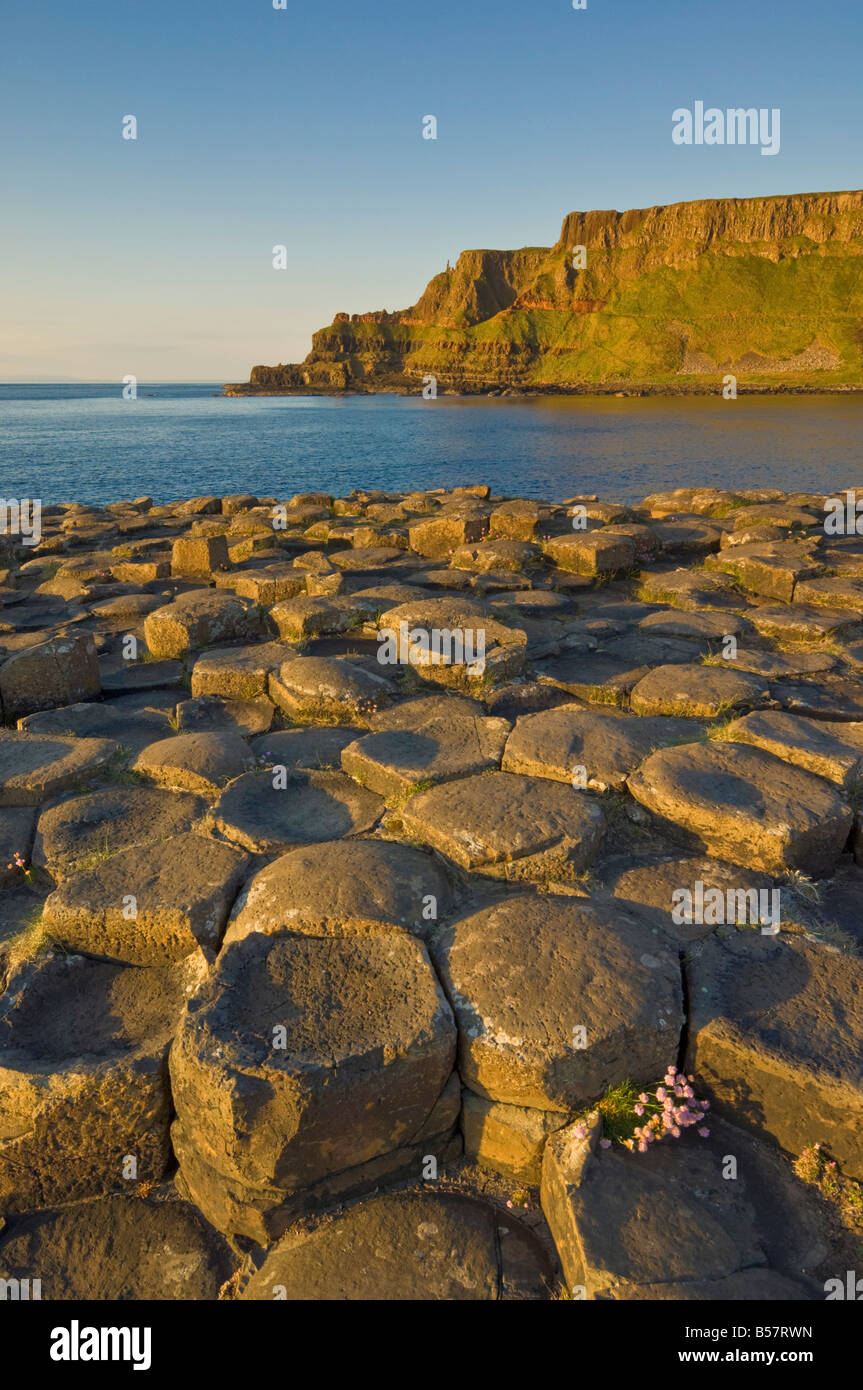 Hexagonal basalt columns of the Giant's Causeway, near Bushmills, County Antrim, Ulster, Northern Ireland, United - Stock Image