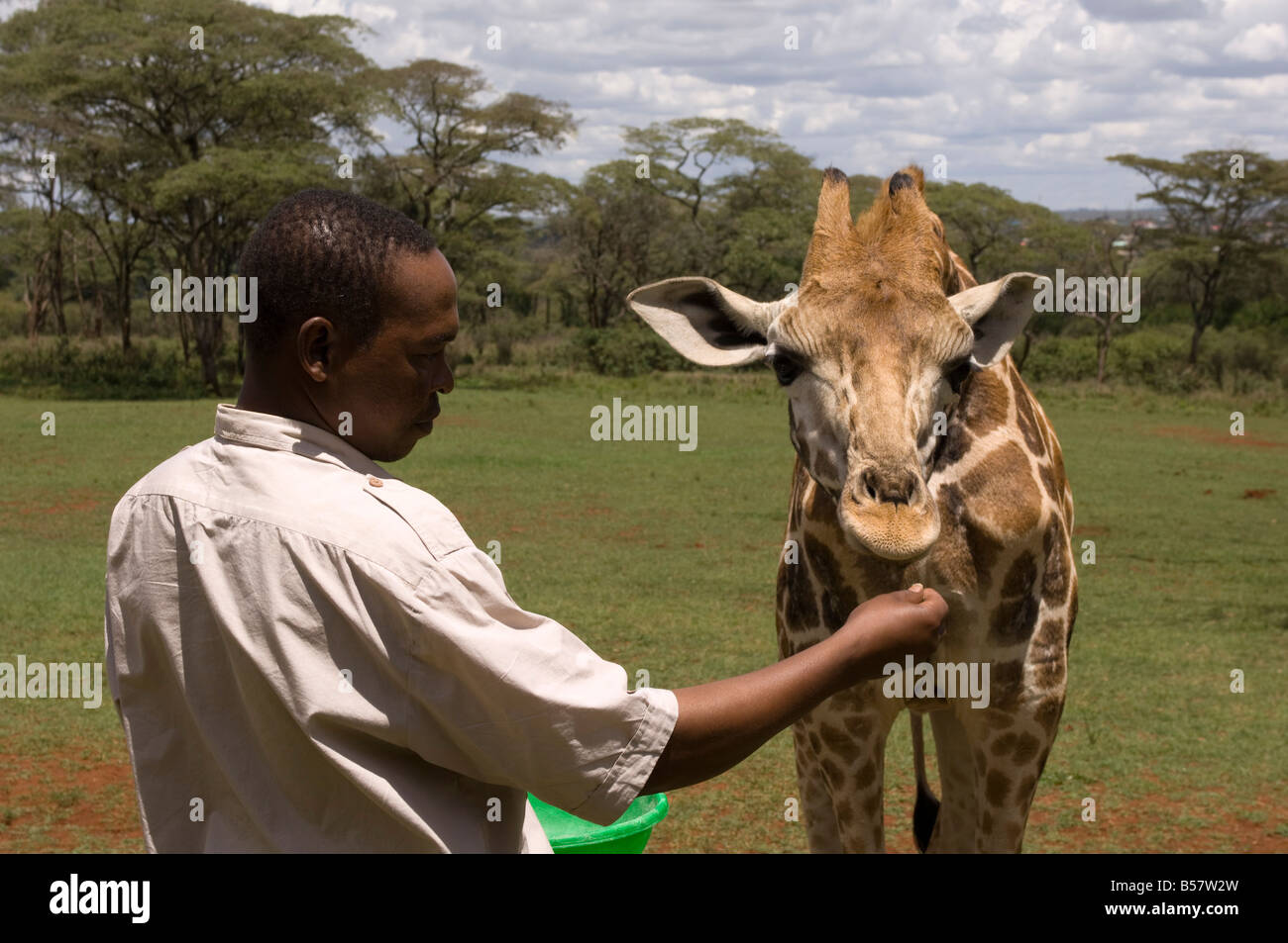 Rothschild giraffe, Giraffe Manor, Nairobi, Kenya, East Africa, Africa Stock Photo