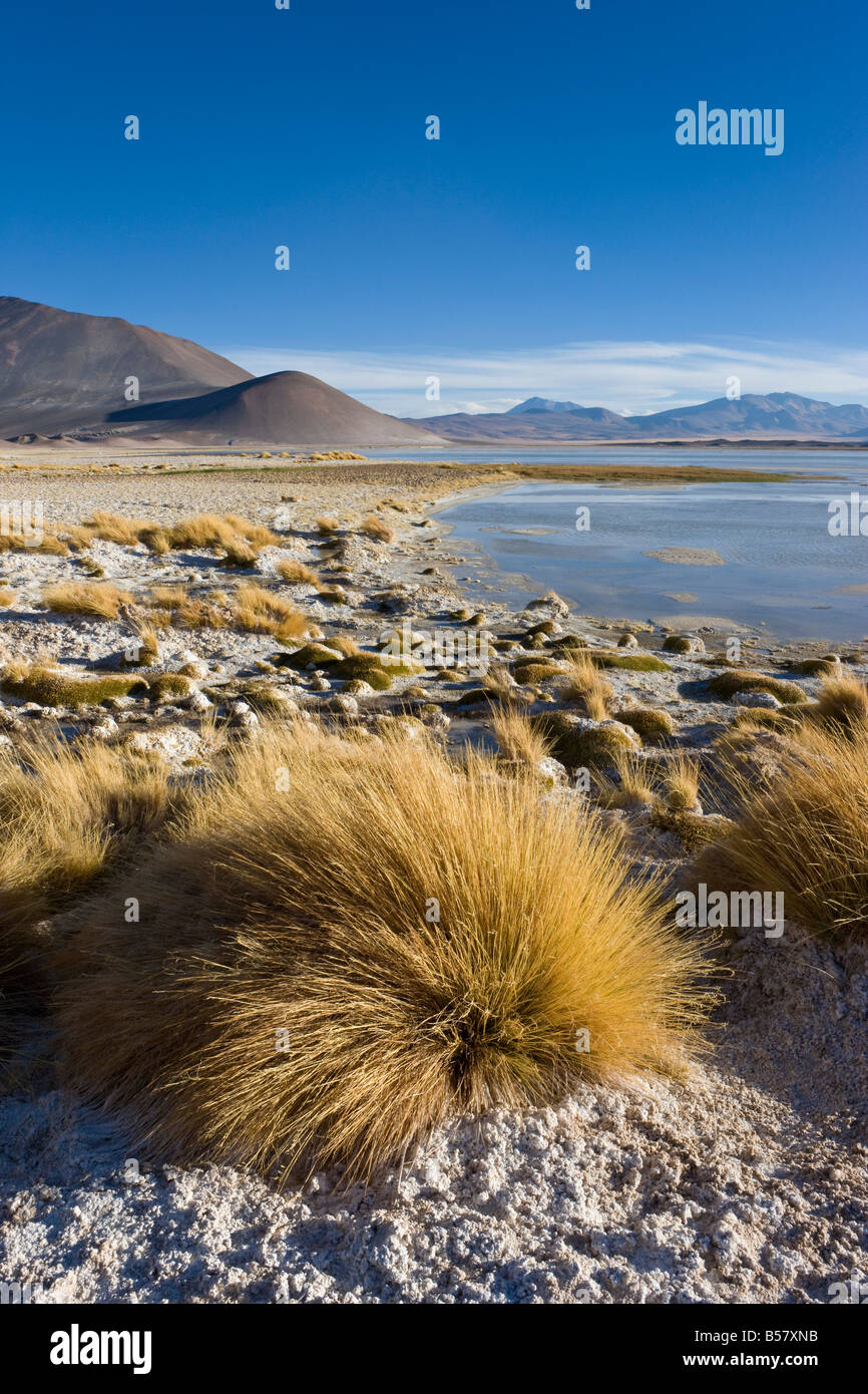 Altiplano, Los Flamencos National Reserve, Atacama Desert, Antofagasta Region, Norte Grande, Chile, South America - Stock Image