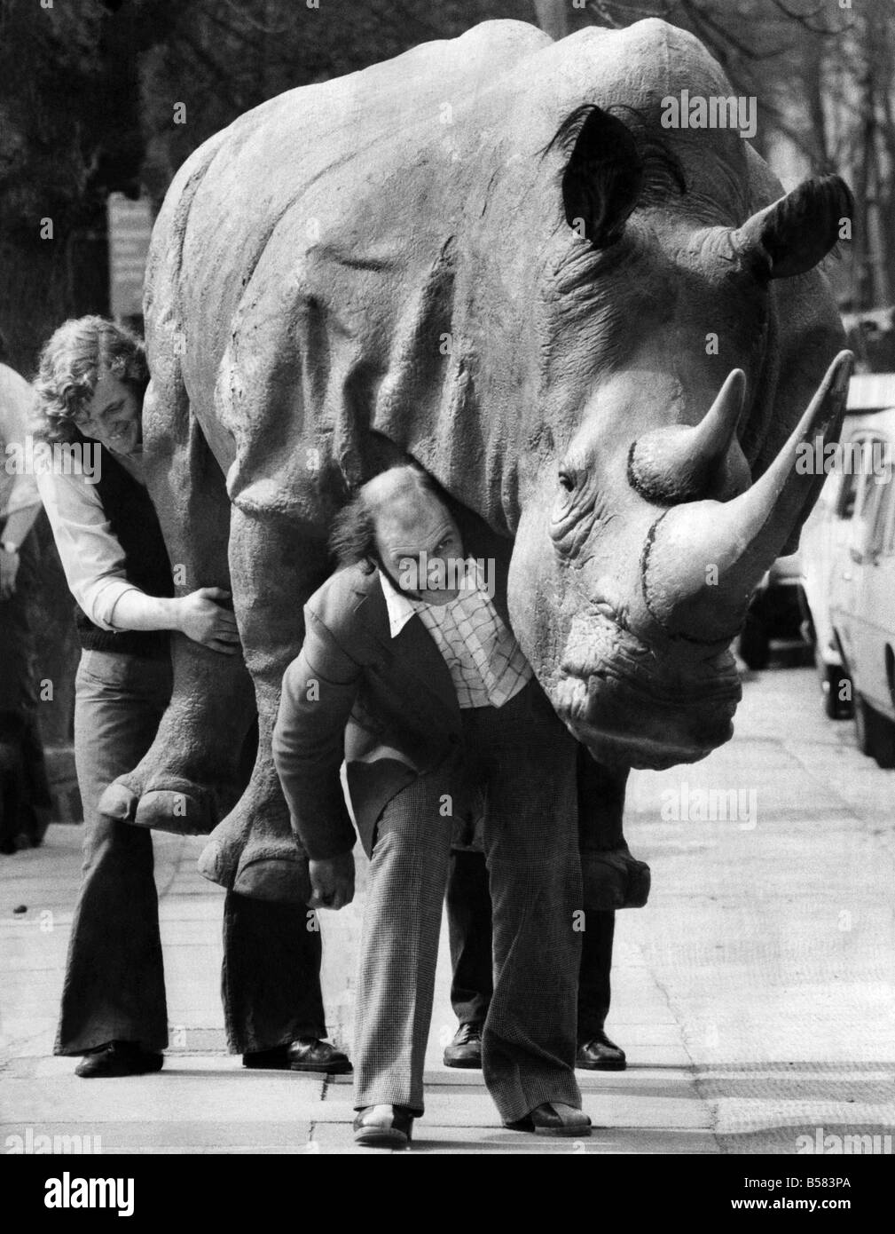 On Safari in London: A Rhino was seen running loose in London today. A life size, life like model of a Rhino made - Stock Image