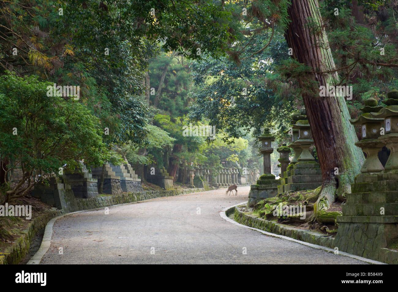 Path to Kasuga-Taisha Shrine, UNESCO World Heritage Site, Nara, Kansai (Western Province), Honshu, Japan, Asia - Stock Image