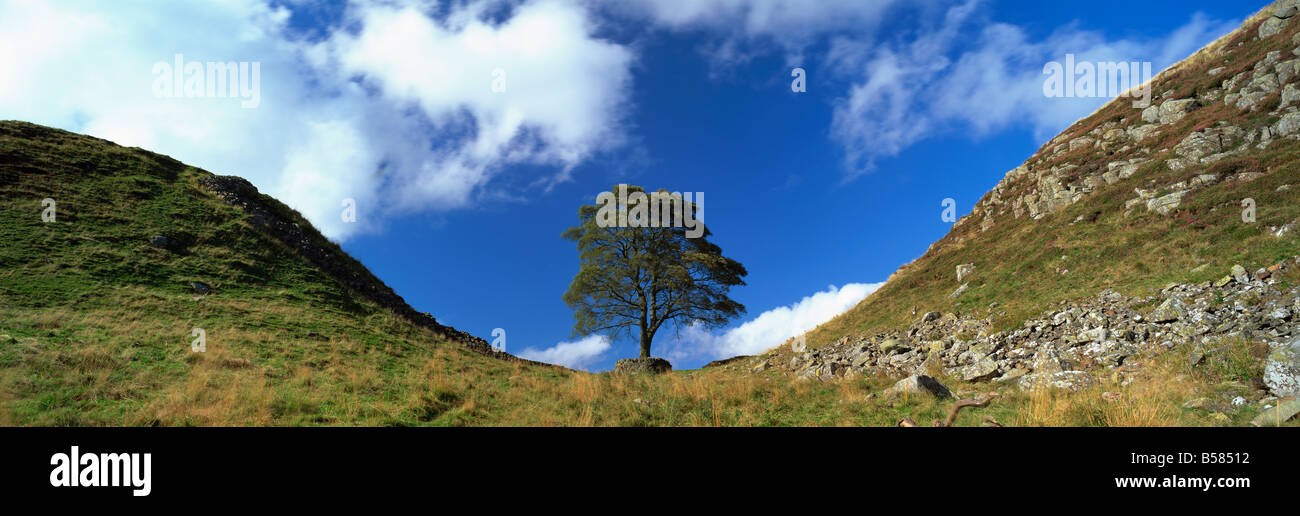 Sycamore Gap, Hadrian's Wall, near Hexham, Northumberland, England, United Kingdom, Europe - Stock Image