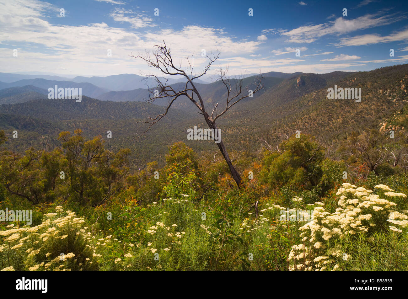 Alpine High Country, Snowy River National Park, Victoria, Australia, Pacific - Stock Image