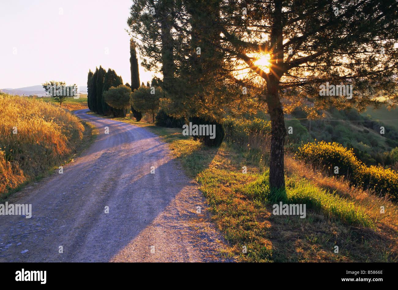 Country lane at sunrise, with sun shining through trees, near Pienza, Tuscany, Italy, Europe - Stock Image