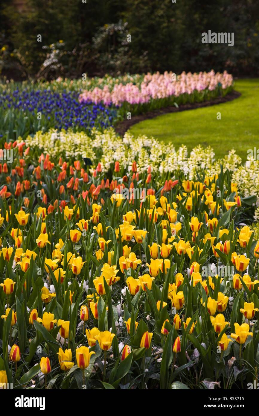 tulip flower borders, keukenhof, park and gardens near amsterdam