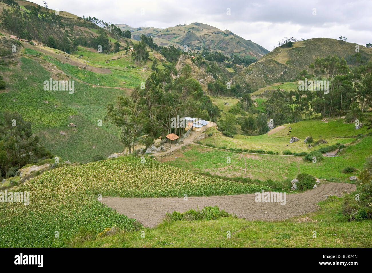 Maize fields and farm of indigenous Canari people, Ingapirca, Canar Province, Ecuador - Stock Image