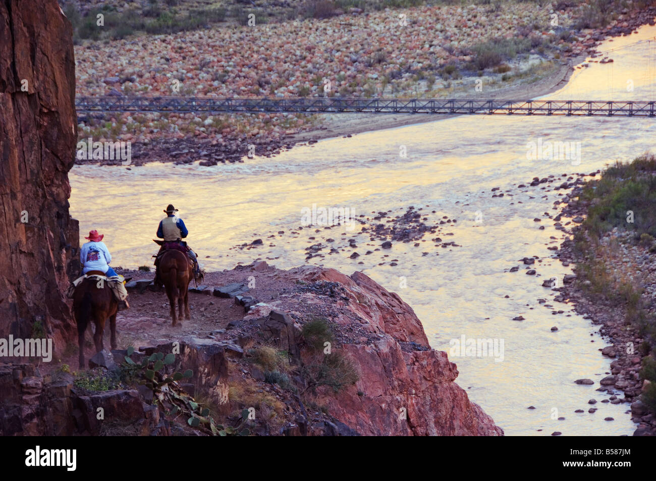 Mules taking tourists along the Colorado River Trail, Grand Canyon, Arizona, United States of America, North America - Stock Image