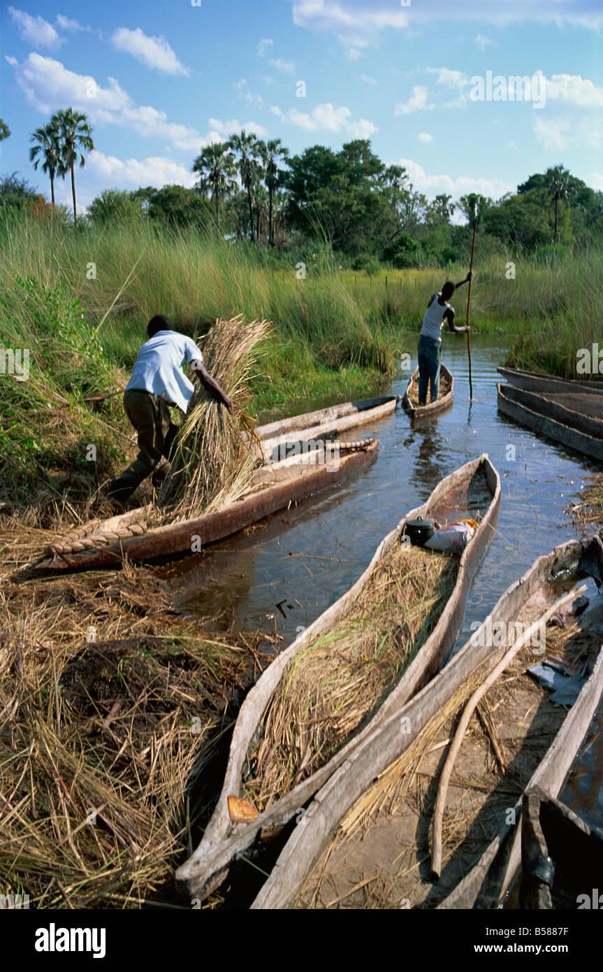 Mokoros dugout canoes Okavango Delta Botswana Africa - Stock Image