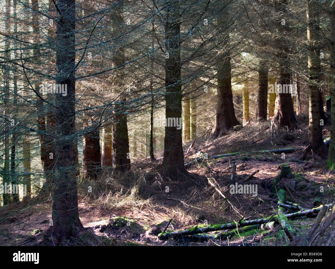 Commercial forestry in Glen Lyon - Stock Image