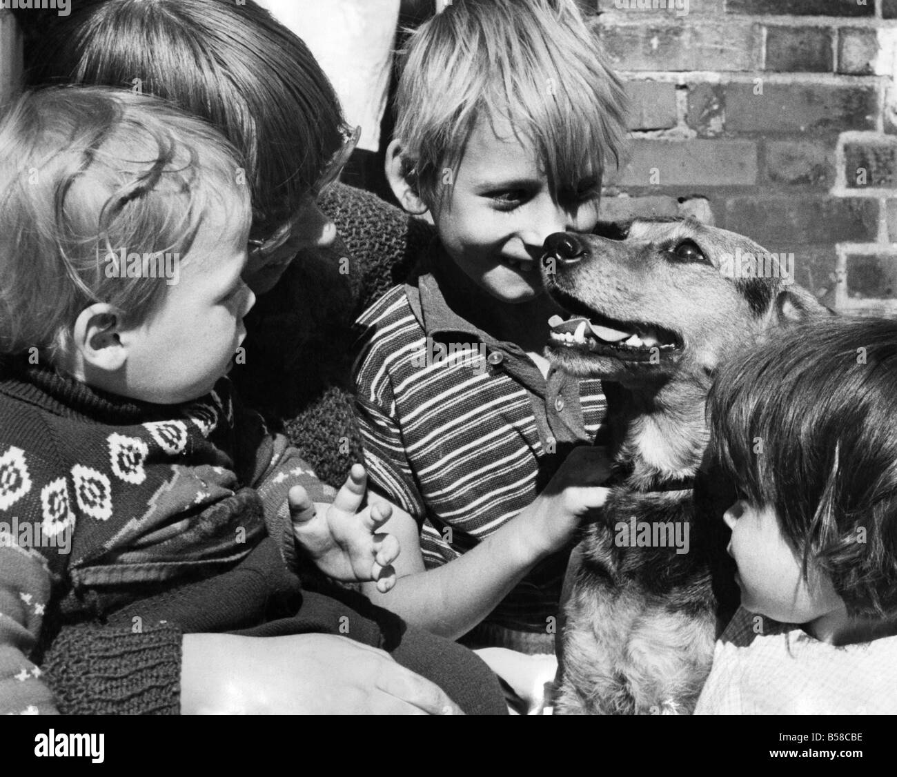 Darkie, a seven year old mongrel will be the lifelong friend of these children. Left to right Ernest Thurston, 2, Stock Photo