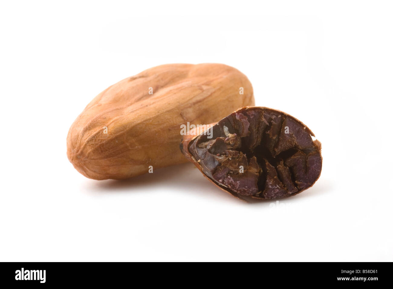Cacao Beans on a White Background. One is split in half to show contents. - Stock Image