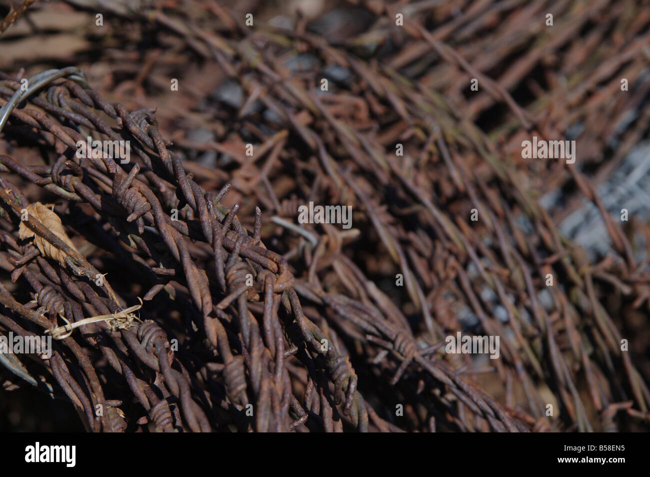 close up photo of rusty barbwire - Stock Image