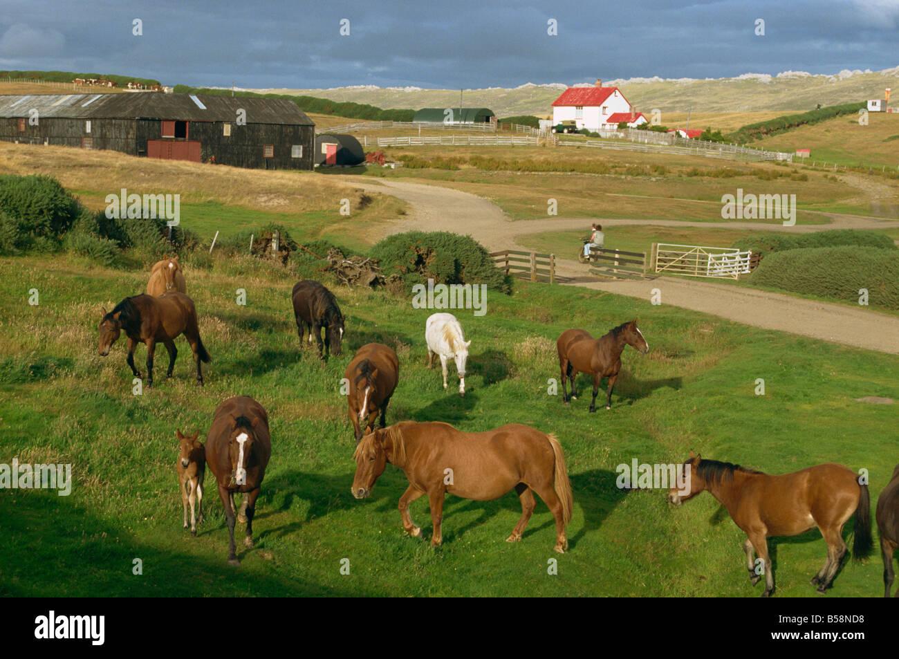 Port Howard, Falkland Islands, South America - Stock Image