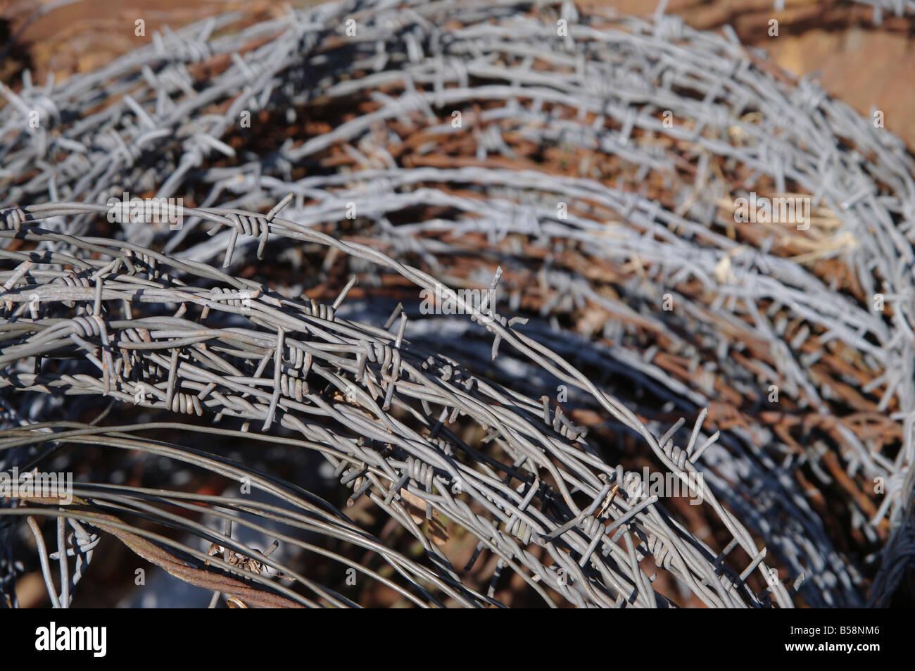 close up photo of rusty barbwire - Stock Image