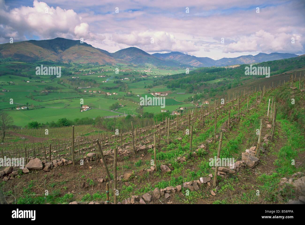 Vineyards near St. Jean Pied de Port, Basque area, Aquitaine, France, Europe - Stock Image