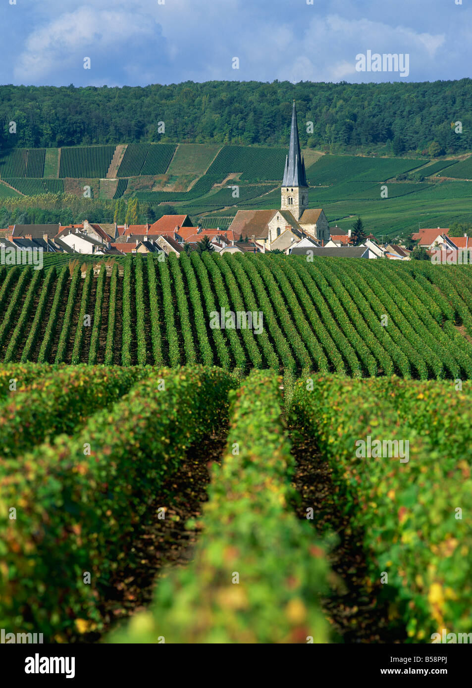 Chamery, Montagne de Reims, Champagne, France, Europe - Stock Image