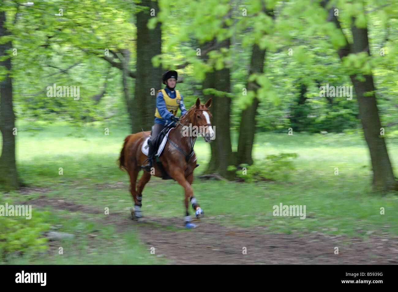 Horse rider at spring afternoon on the woods - Stock Image