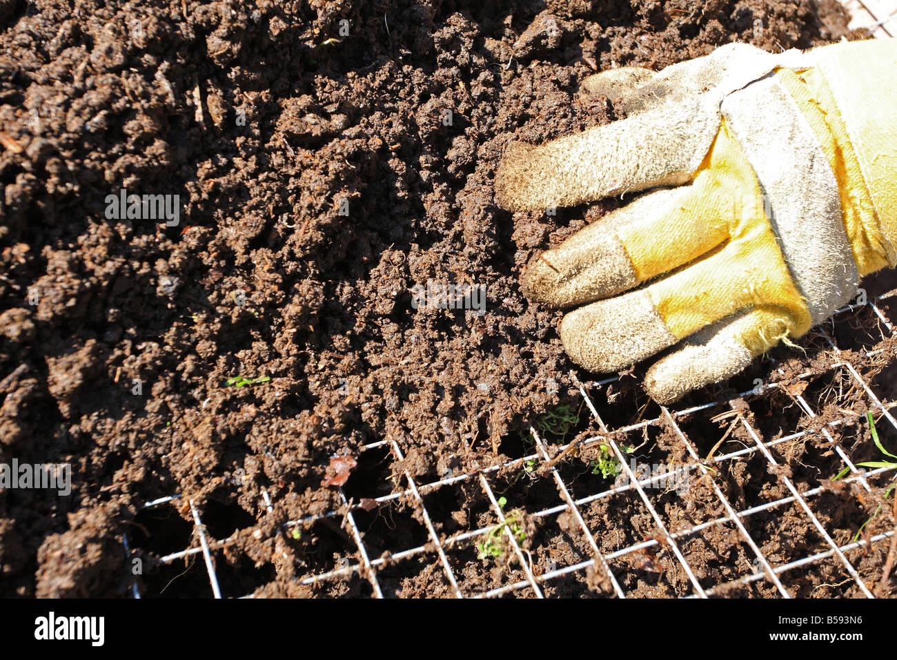 SIEVING COMPOST THROUGH 1 INCH MESH TO REMOVE ANY LARGE LUMPS CLOSE UP - Stock Image
