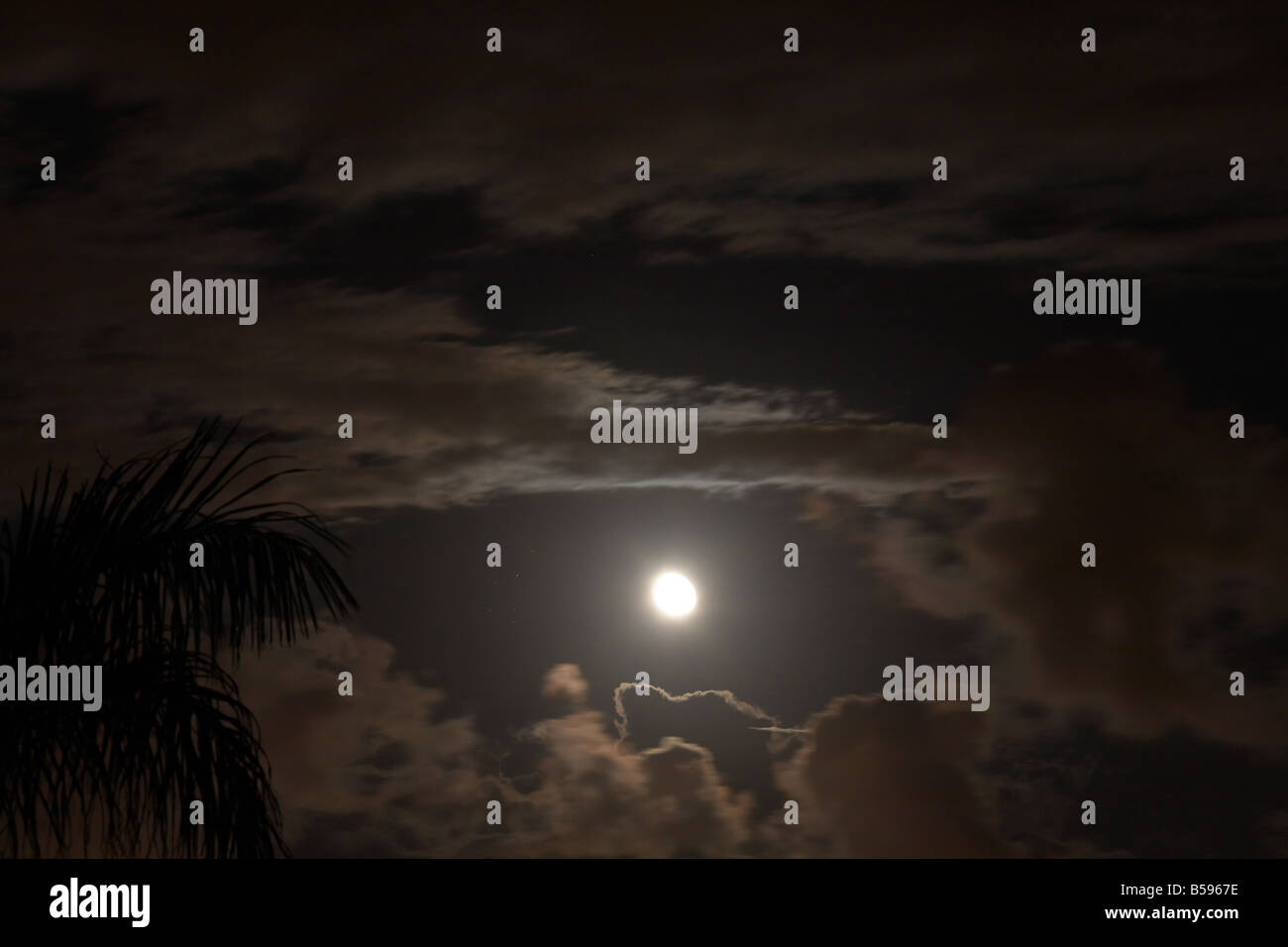 Full moon behind dark scudding clouds at night with palm tree in Queensland QLD Australia - Stock Image