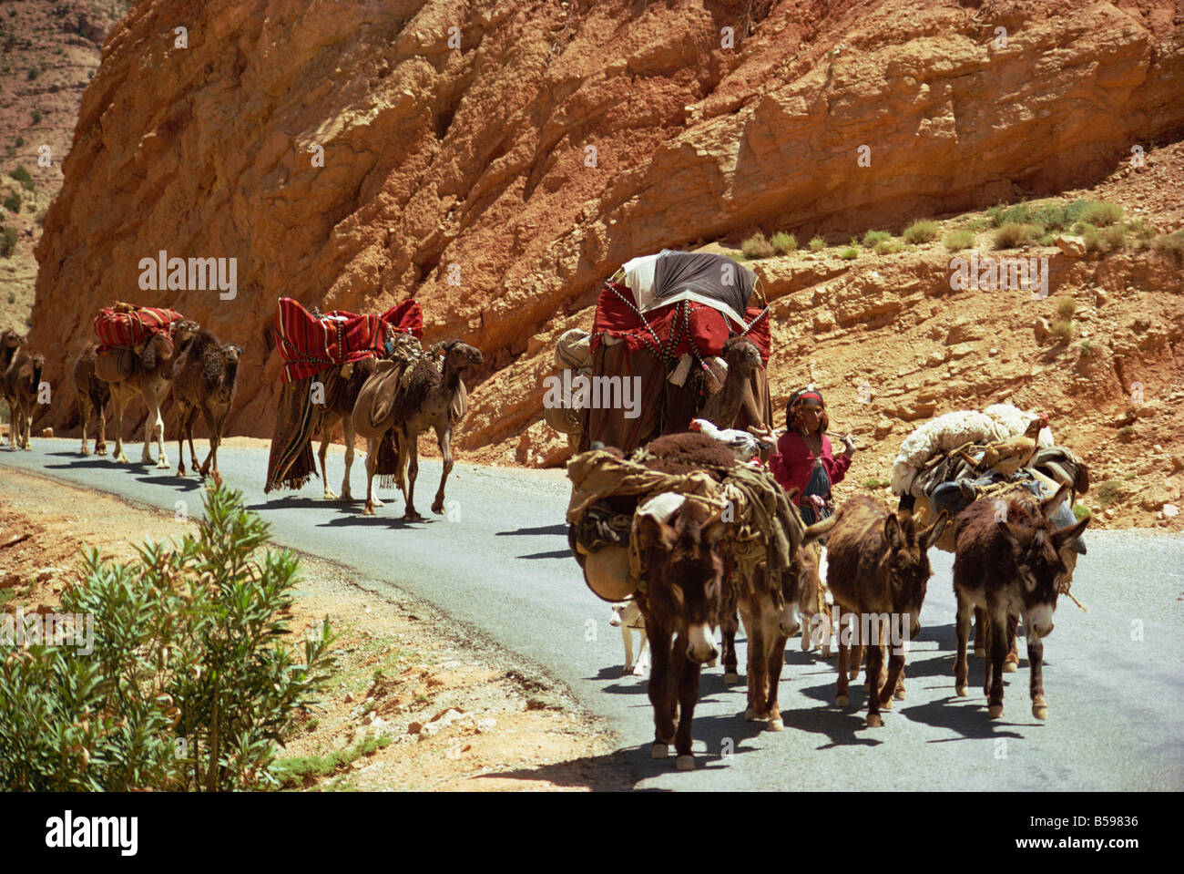 Oued Abiod Gorge, Aures Mountains, Algeria, North Africa, Africa - Stock Image