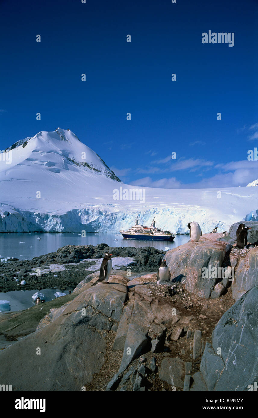 Gentoo penguins and Cruiseship World Discoverer Antarctic Peninsula Antarctica Polar Regions - Stock Image