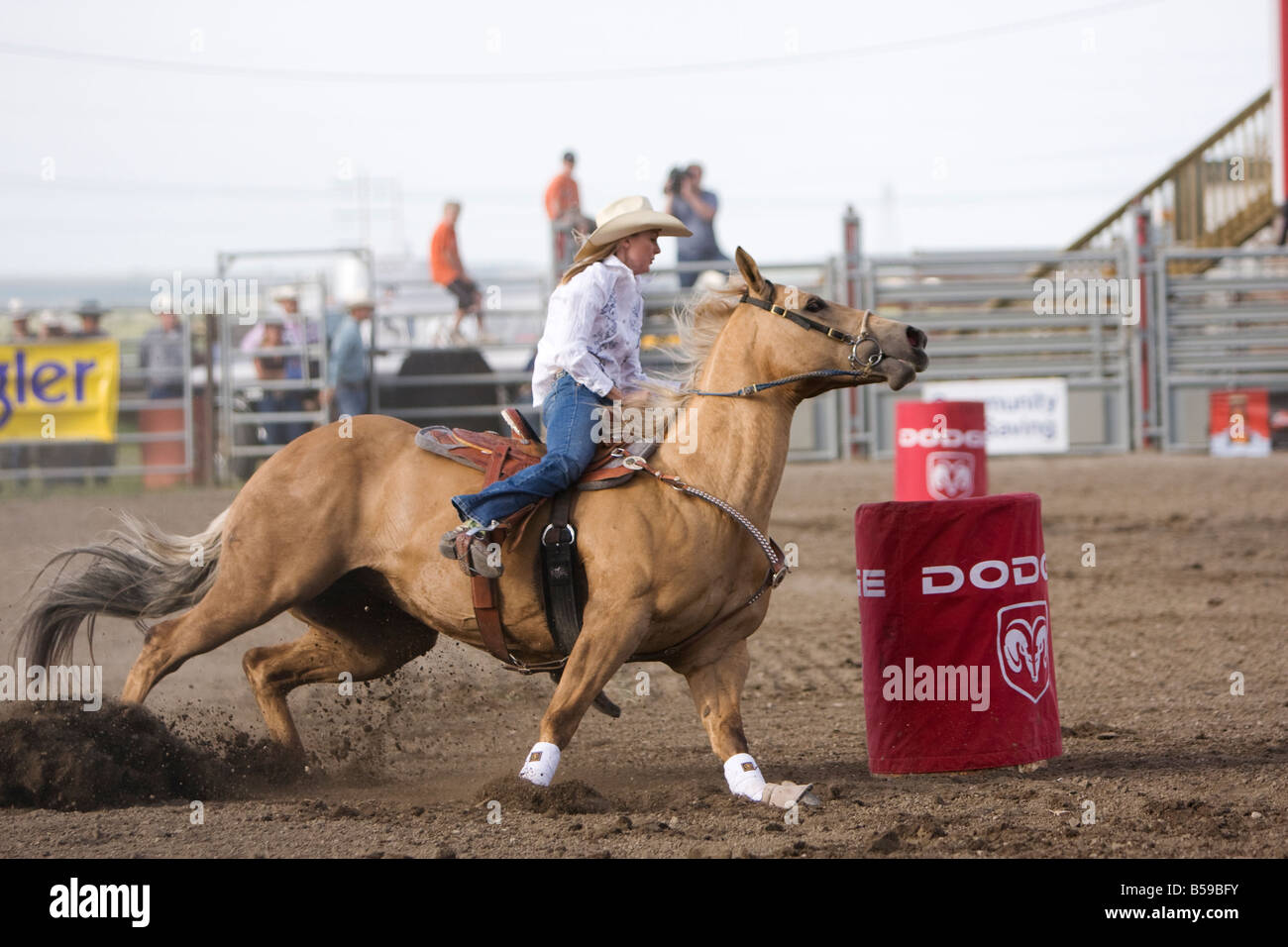 A Cowgirl Barrel Racing Around A Red Barrel On A Palomino Horse At A Stock Photo Alamy