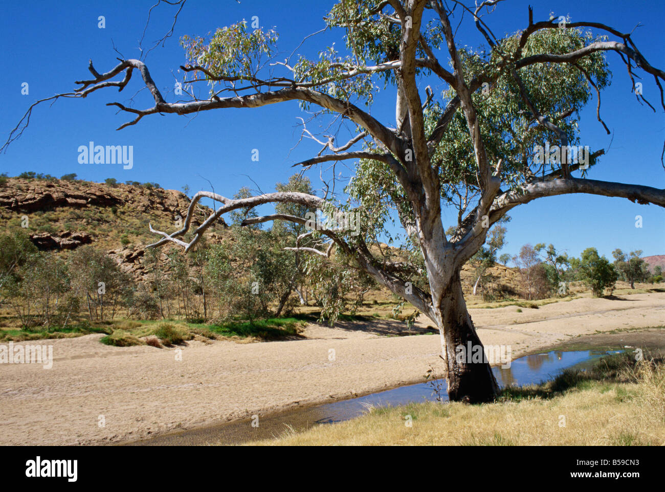 Dry bed of Todd River Alice Springs Northern Territory Australia Pacific - Stock Image