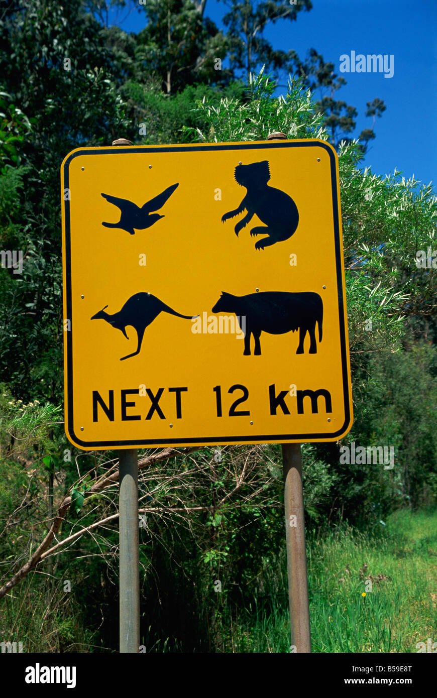 Typical traffic sign, Australia, Pacific - Stock Image