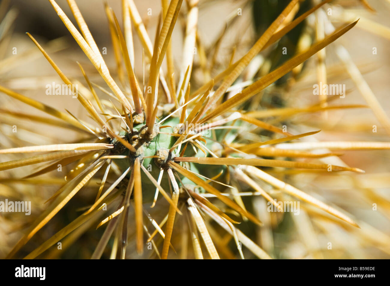 close up of cactus - Stock Image
