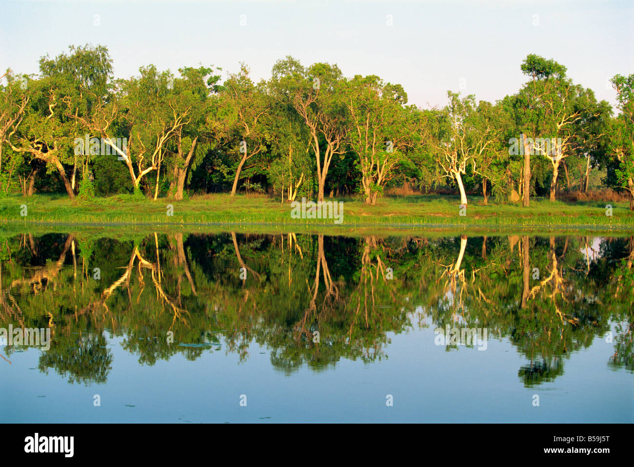 Reflections of eucalyptus trees on Annaburroo Billabong the Arnhem Highway at the Mary River Crossing, Australia Stock Photo