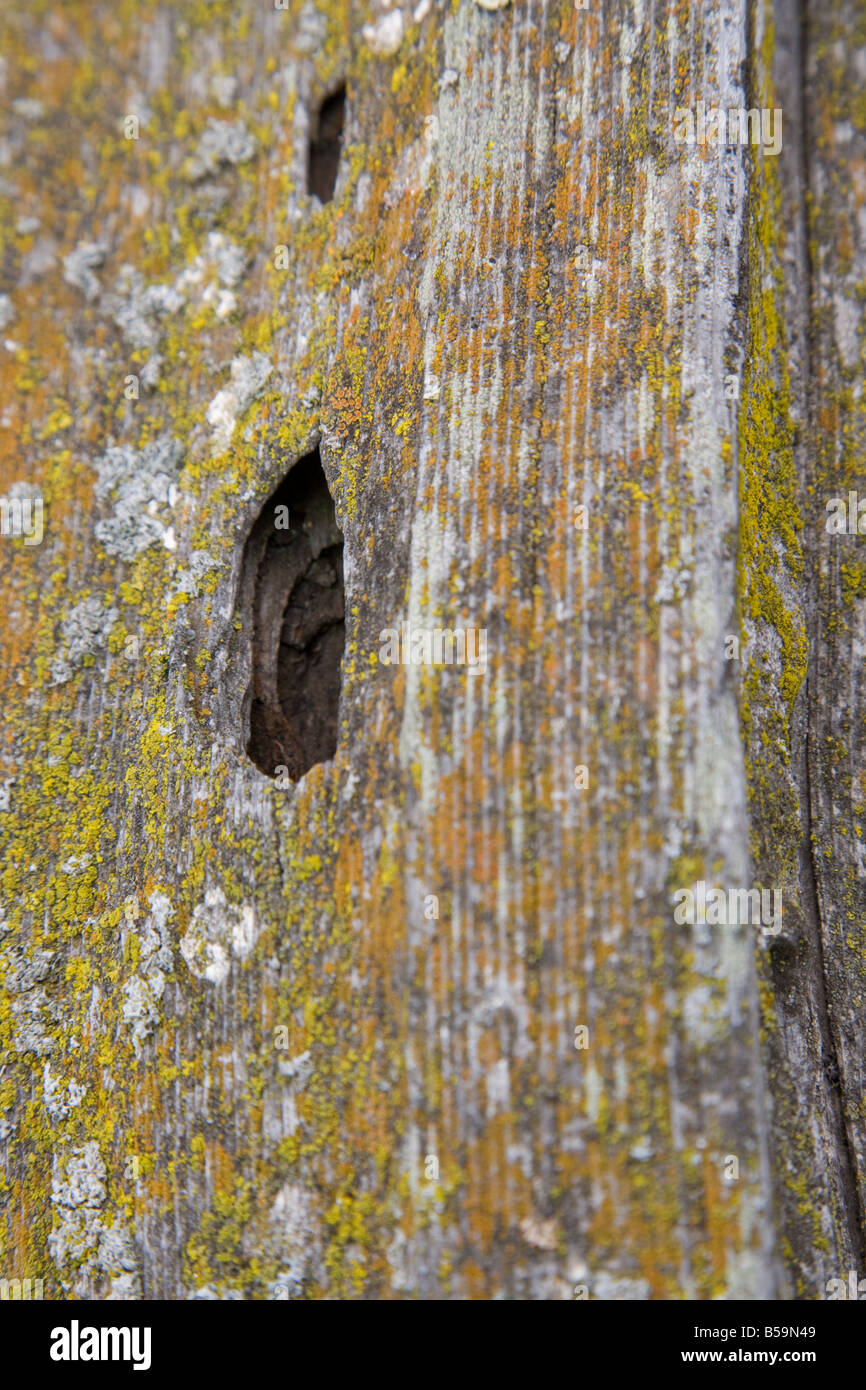 Aging fence post - Stock Image