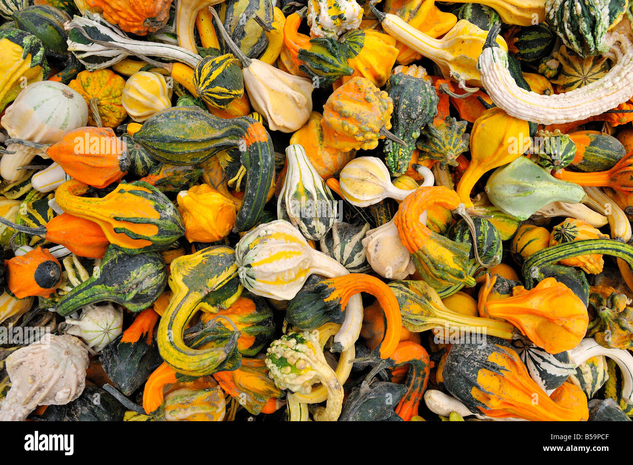 Decorative Gourds For Sale At A New York City Green Market Stock