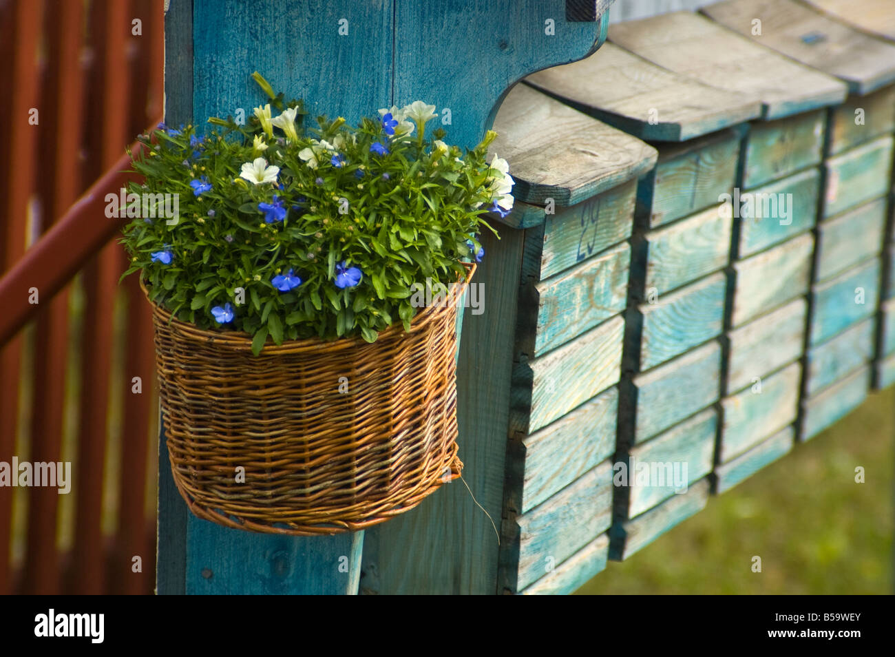Flowers in a basket at the end of line of post boxes in Tällberg, Dalarna, Sweden - Stock Image