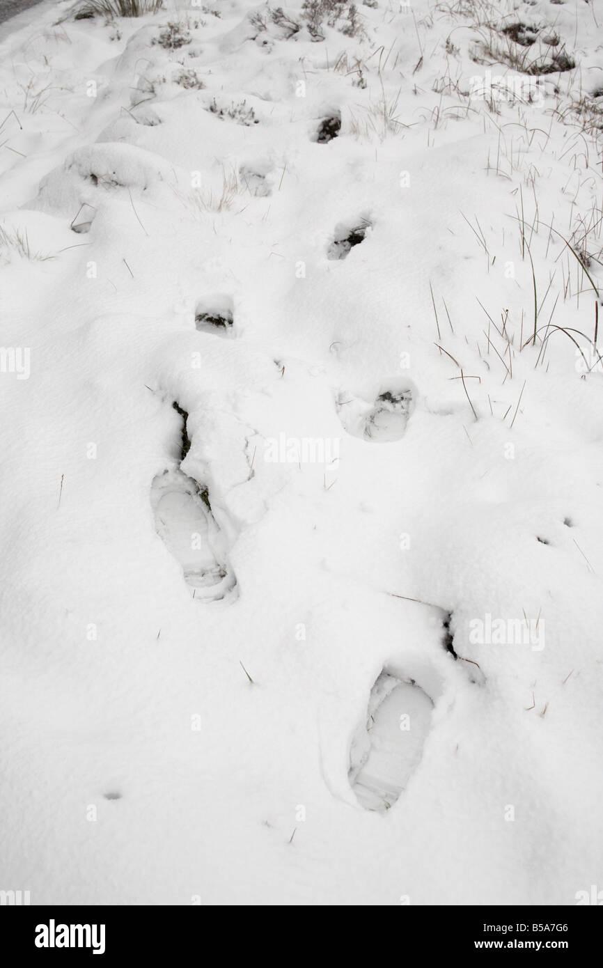 footprints in a snowdrift county antrim northern ireland uk - Stock Image