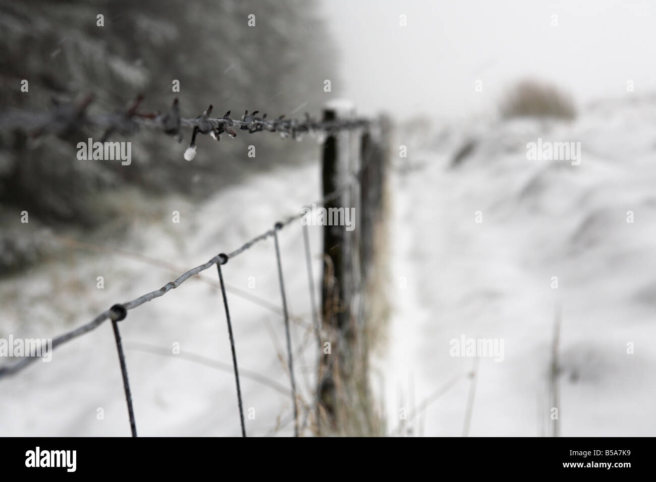 barbed wire fence coated in snow and ice on the edge of a forest county antrim northern ireland uk - Stock Image