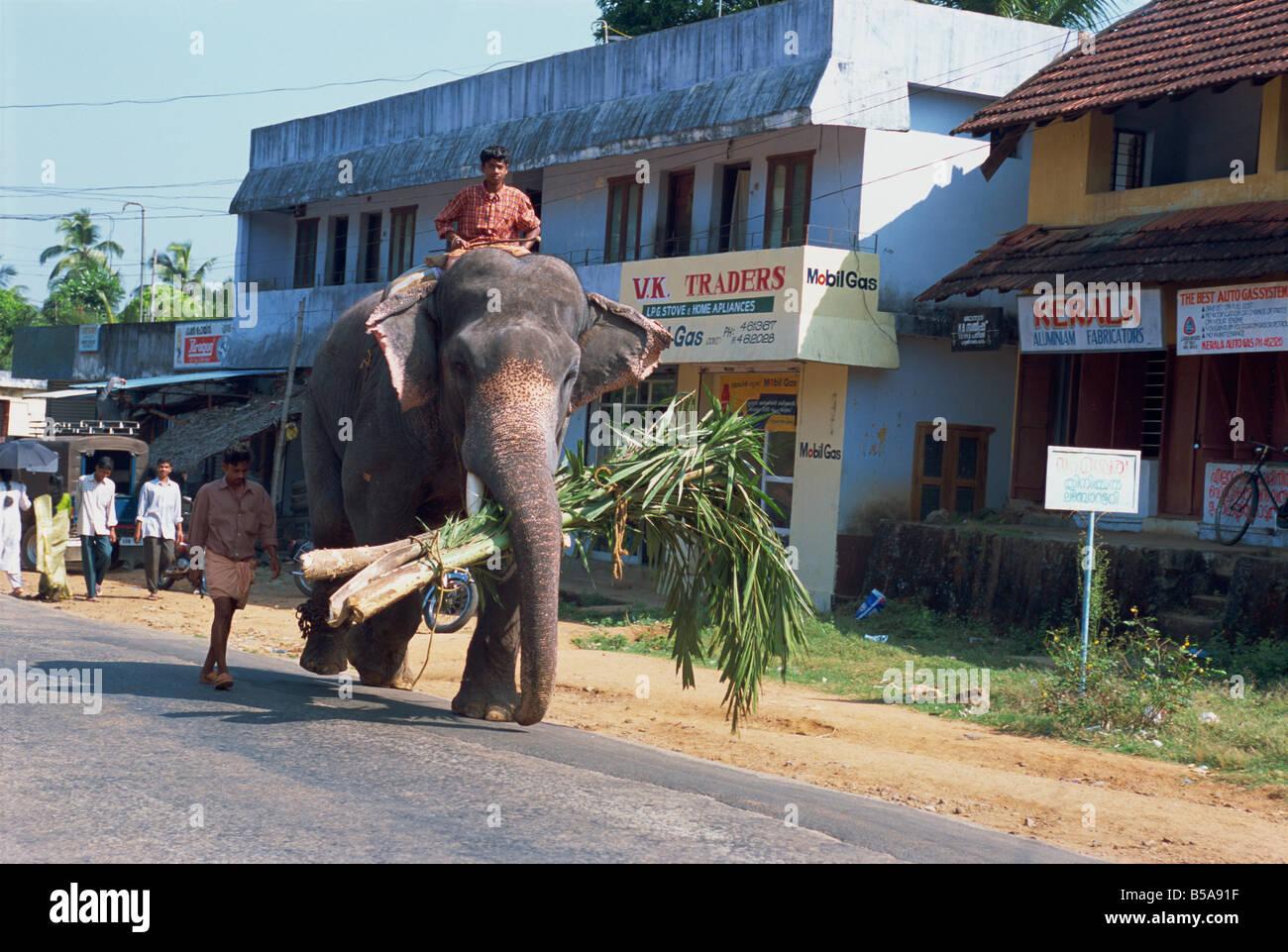 Kerala Road Walking Stock Photos & Kerala Road Walking ...