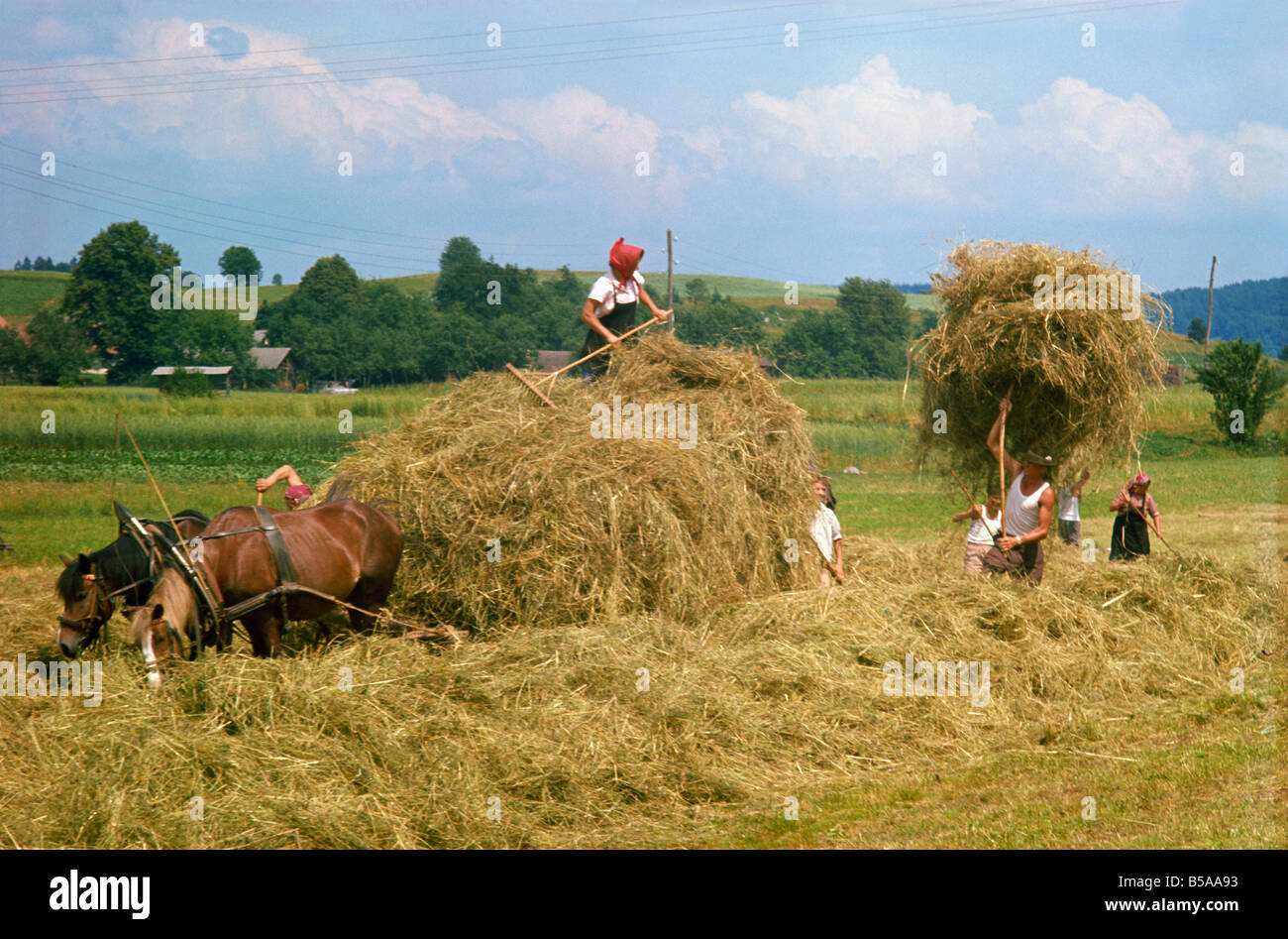Haymaking in olden days Europe - Stock Image