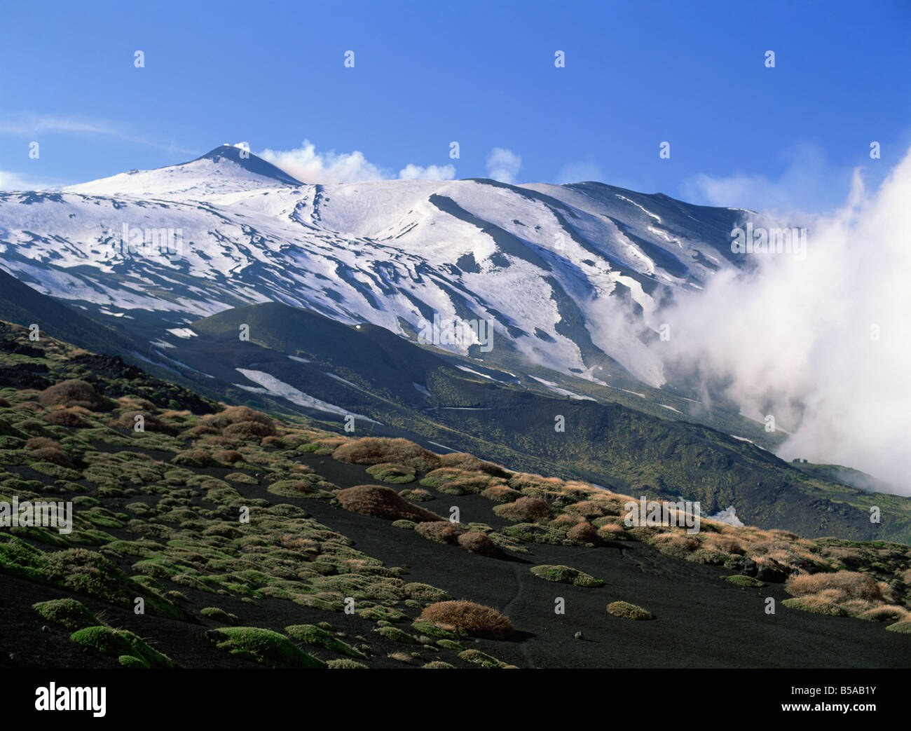 Clumps of thorn amid lava fields on northern slopes of Mount Etna Sicily Italy Europe - Stock Image