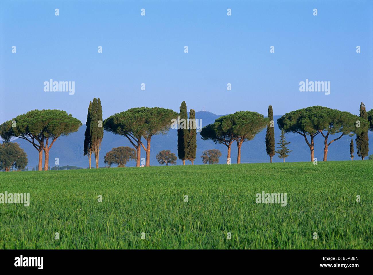 Pin parasol et cypres Paysage province de Grosseto Toscane Italy - Stock Image