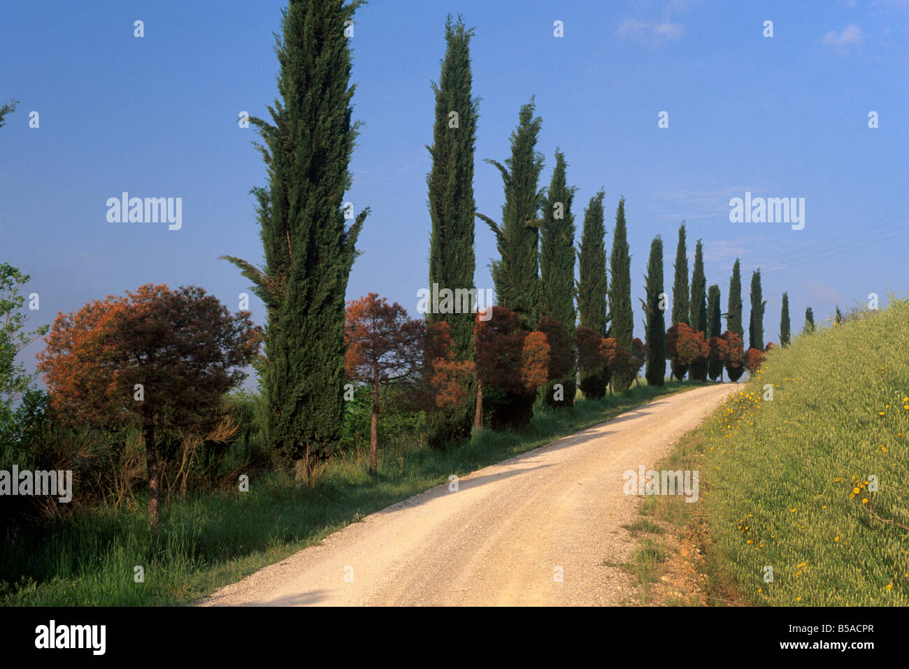 Alley with cypress trees near San Quirico d'Orcia, Val d'Orcia, Tuscany, Italy, Europe - Stock Image