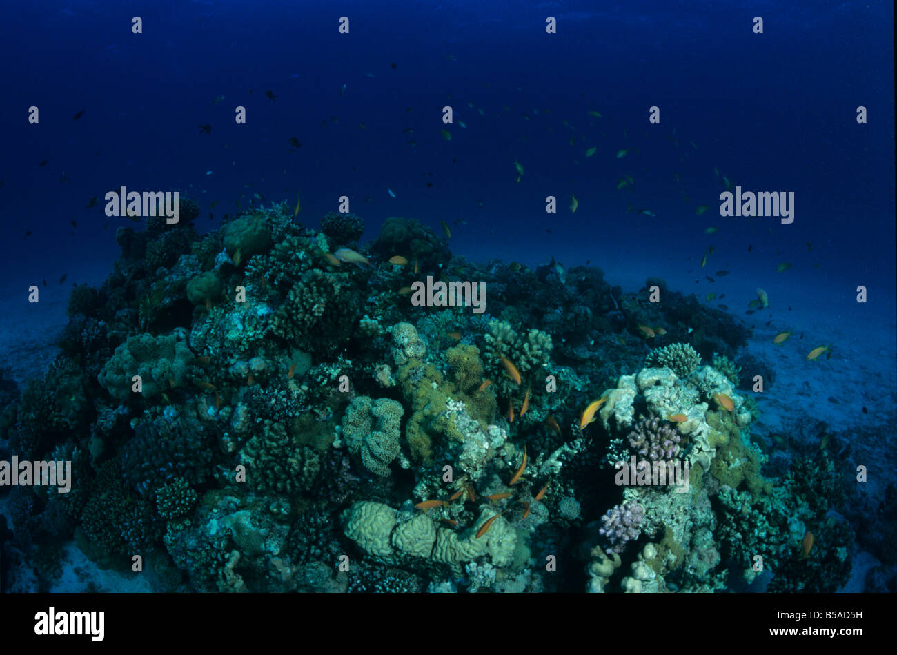 Tropical Coralreef, the Red Sea - Stock Image