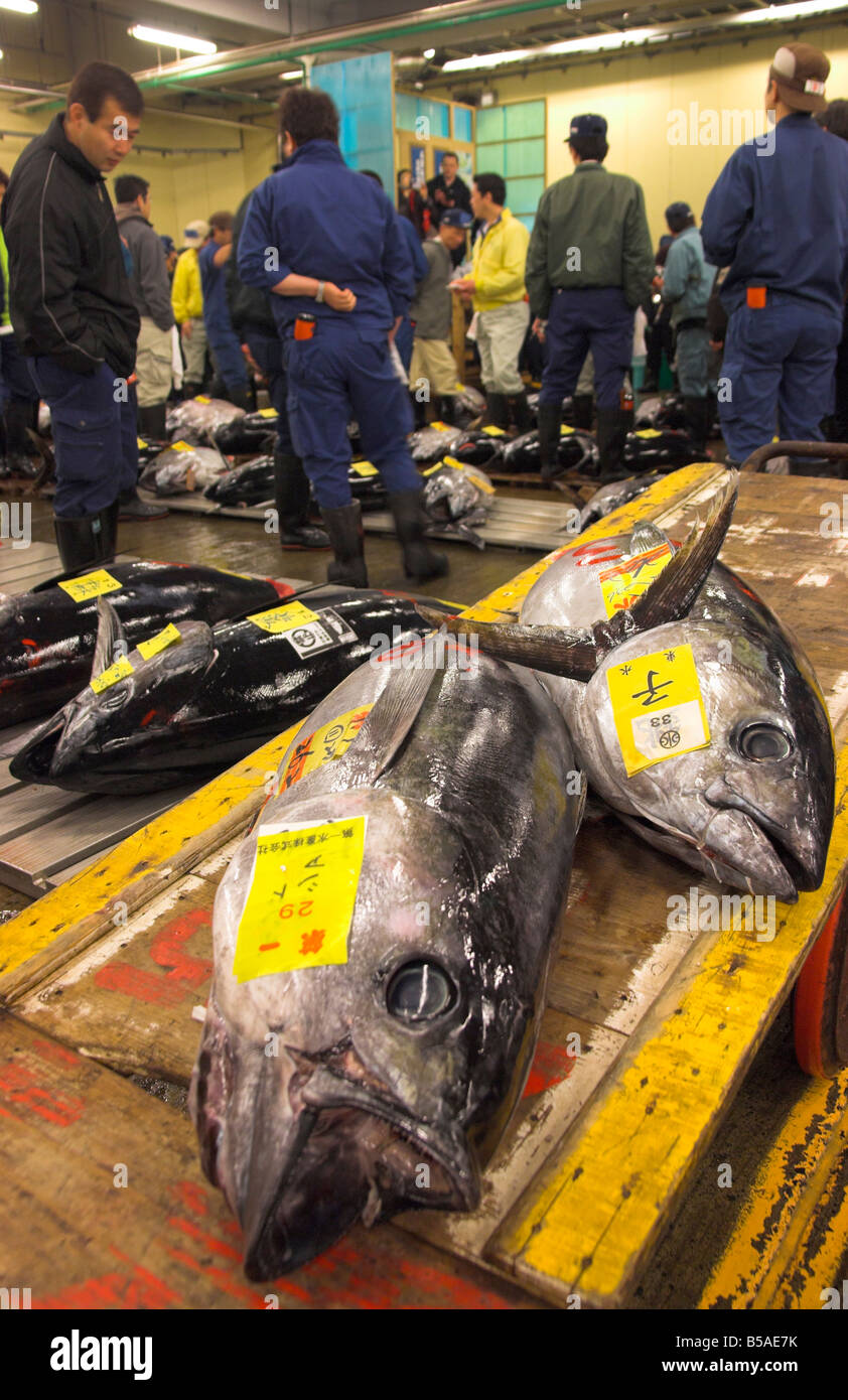 Large tuna fish on trolley with buyers in background, tuna auction, Tsukiji fish market, Tokyo, Honshu, Japan - Stock Image