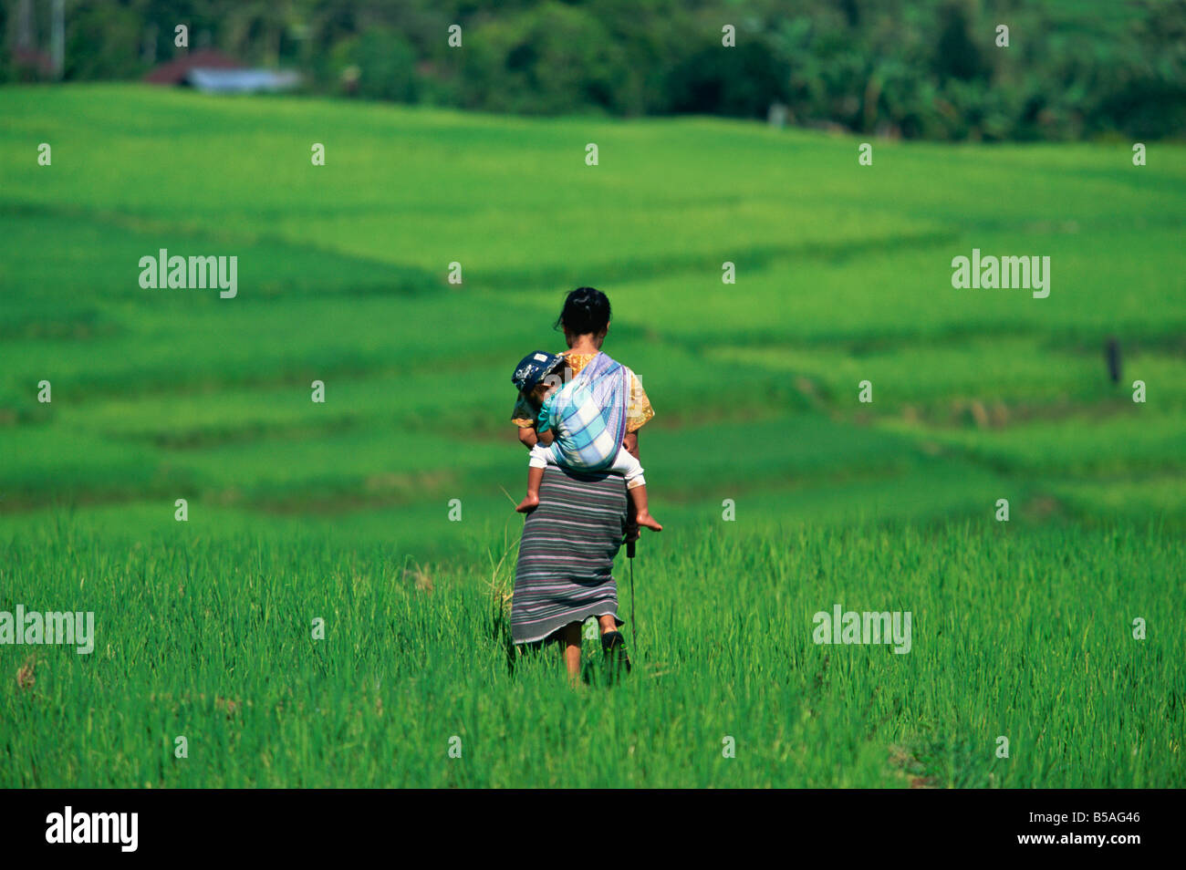 Mother and child in the rice terraces of Ruteng, Flores, Indonesia, Southeast Asia Stock Photo