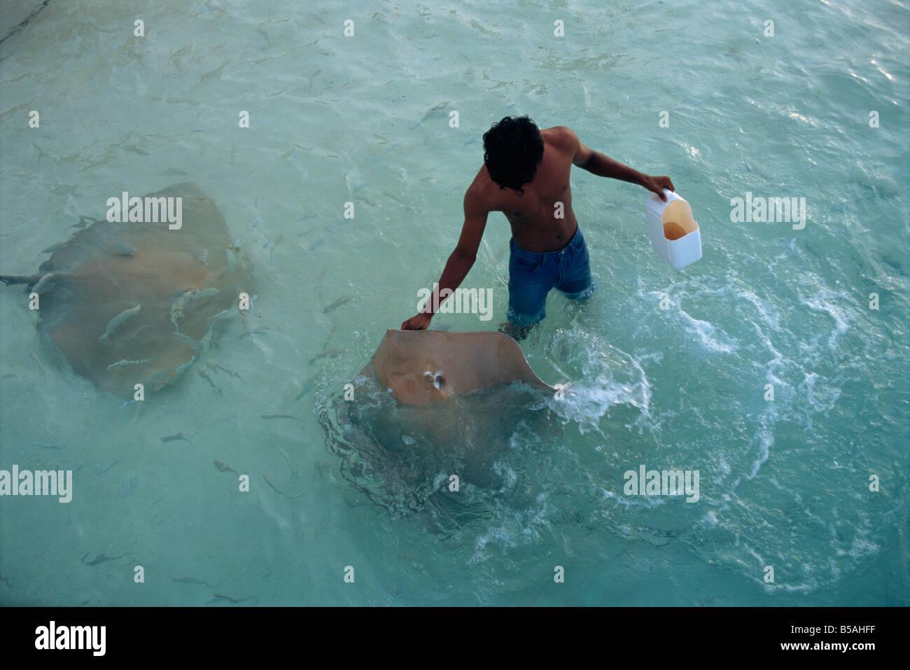 Sting rays, Nakatchafushi, Maldive Islands, Indian Ocean - Stock Image